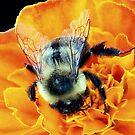 Buzz Off © by Dawn Becker