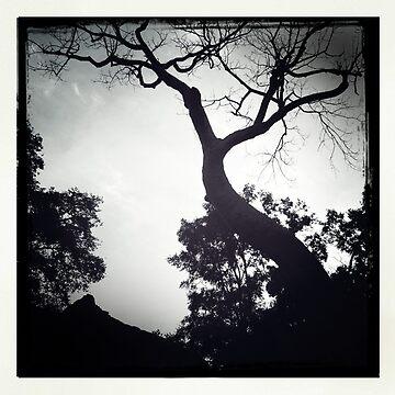 The Old Tree by georginho