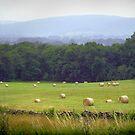 Blue Ridge Mountains, Virginia by edarlingphoto