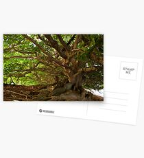 Branches And Roots Postcards