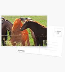 Horse Play Postcards