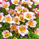 """""""Pretty Posies"""" by kcd-designs"""