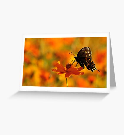 Butterfly Field Greeting Card