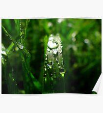 Dew Drop Jewels of Spring Poster