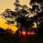 Gunnedah Sunset by Penny Smith