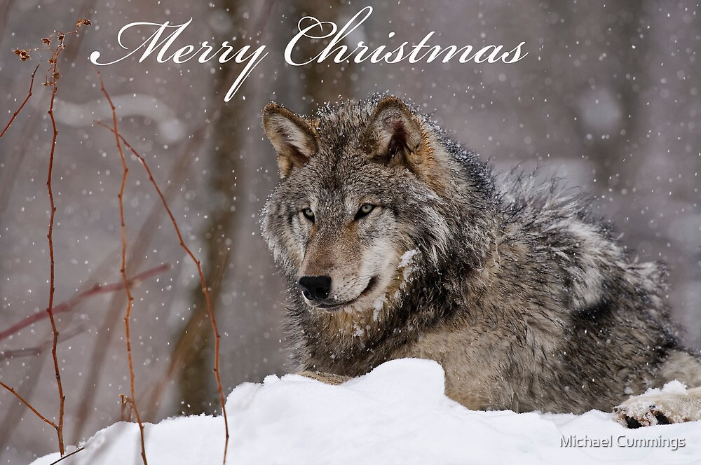 Christmas Card - Timber Wolf \