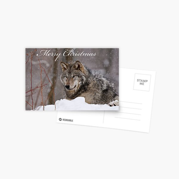 Christmas Card - Timber Wolf  Postcard