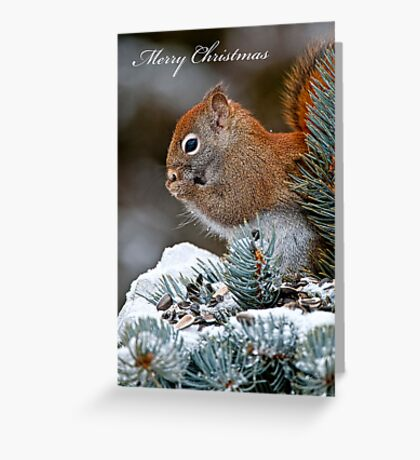Christmas Card - Red Squirrel Greeting Card