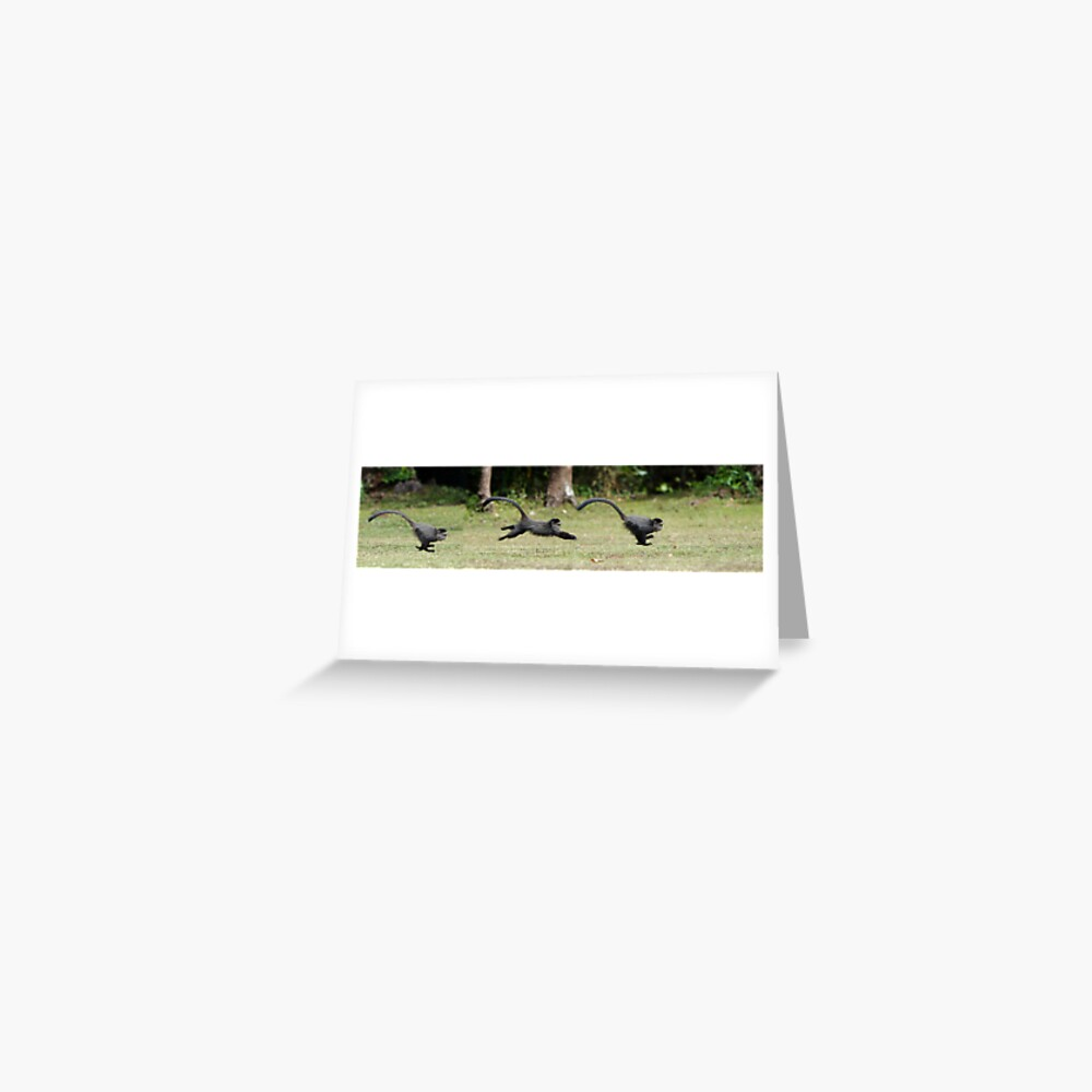 Baby Monkey Sequence Greeting Card