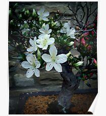 Flowering Bonsai  Poster