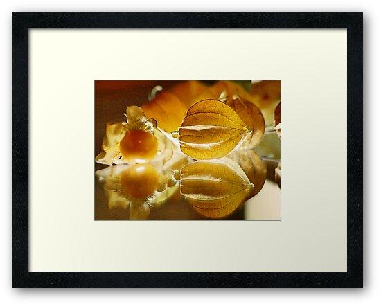 THE GOOSEBERRY - Physalis Solanaceae by Magriet Meintjes