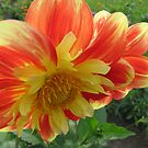 Red and yellow by orko