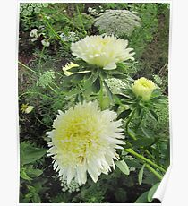 Beauty of nature in green-white Poster