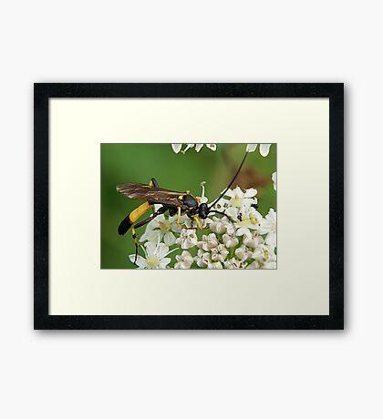 Its a Hornet........ Framed Print