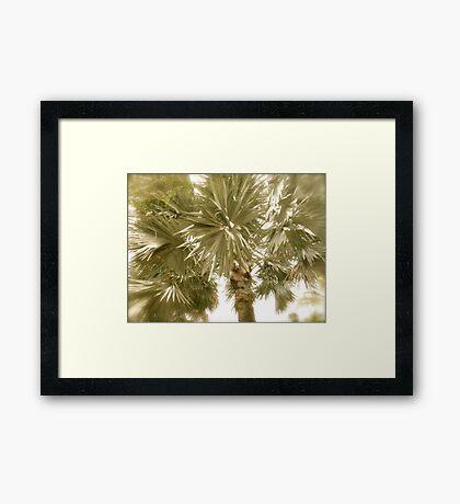 Palm Tree- St. Kitts, Eastern Caribbean Framed Print