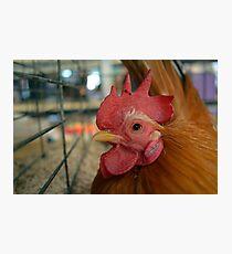 Chicken Photographic Print