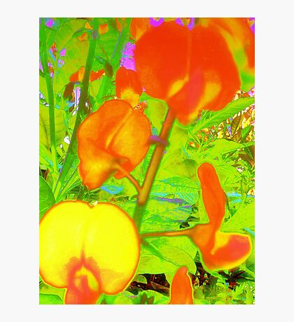 Colorful snapdragons Photographic Print