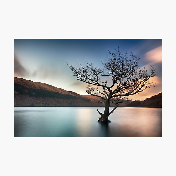 Tree in Water Loch Lomond-Sunset Photographic Print