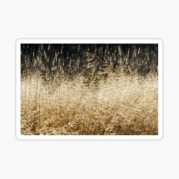 Sunlit Wild Grass Sticker