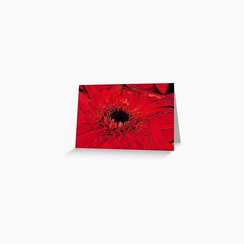 Red Gerberas Greeting Card