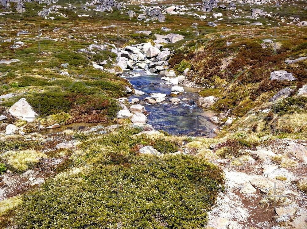 Clear Mountain Stream by eidann
