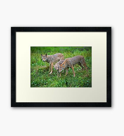 Introducing the youth Framed Print