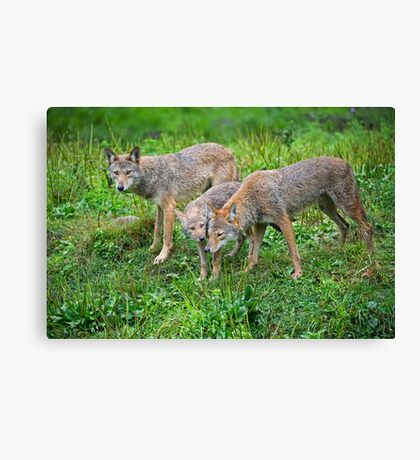 Introducing the youth Canvas Print