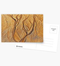Tree in a sand forest Postcards