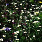 Wildflowers  by karenkirkham