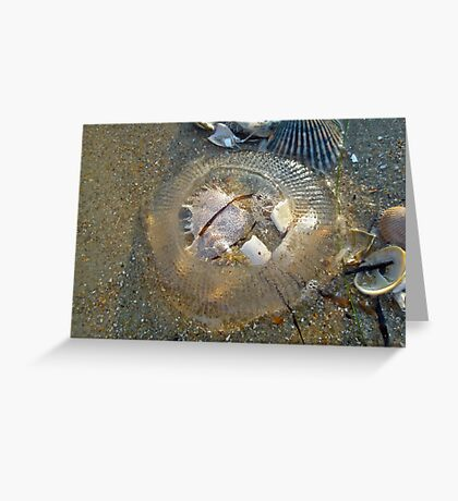Stranded by the Tide - Clear Jellyfish Greeting Card