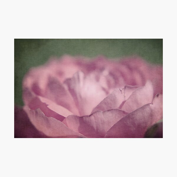 antique pink Photographic Print