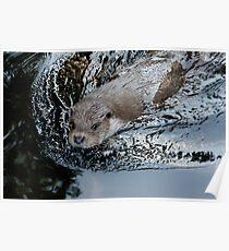 Animal Life - Nutria Poster