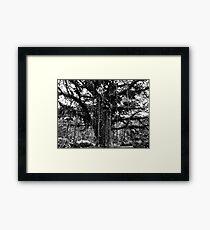 Cameroon Tree Framed Print
