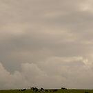 Big Sky Little Cows - Ireland by Jenny Hambleton