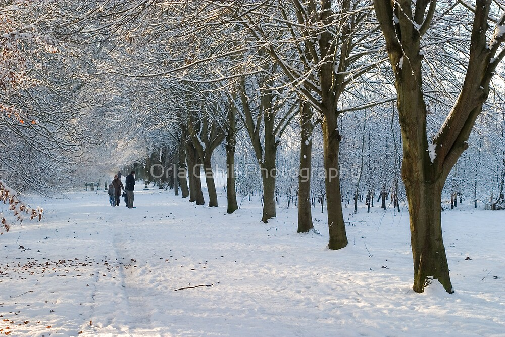 Snowy Weather in Maynooth by Orla Cahill Photography