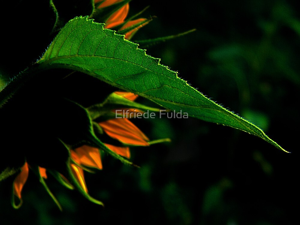 Last One ! by Elfriede Fulda
