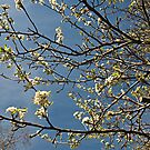 Spring is here by paulmcardle