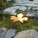 Autumn Usher by Sarah Trent
