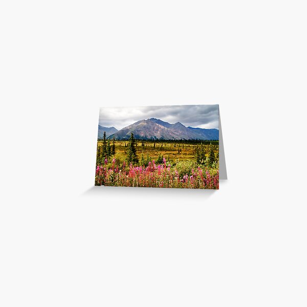 Summer Fireweed Along the Denali Highway Greeting Card