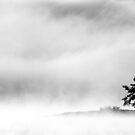 7.10.2015: Islet in Autumn Morning Fog by Petri Volanen
