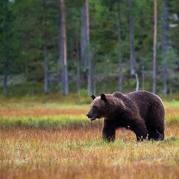 Brown Bear by piddien