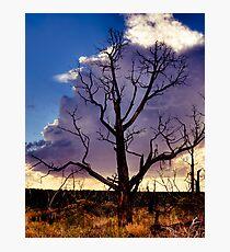 Desolate Mesa Verde Photographic Print
