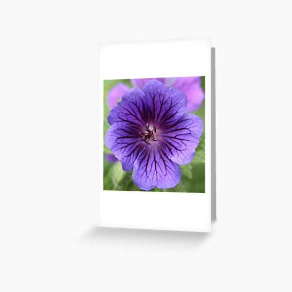 Cranesbill Greeting Card