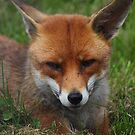 Im so FOXEY! by yampy