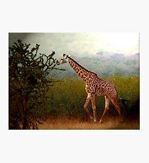 Tallness Photographic Print