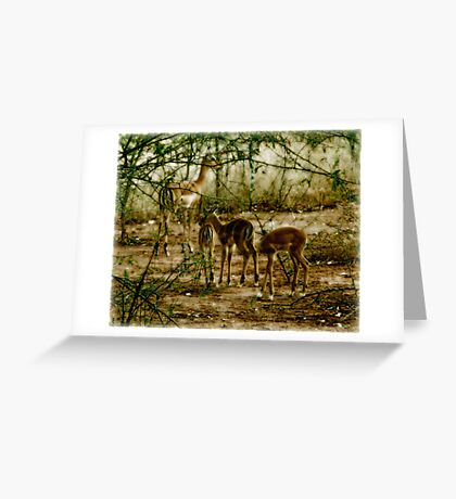 Peaceful Play Greeting Card