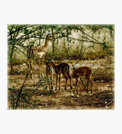 Peaceful Play Photographic Print