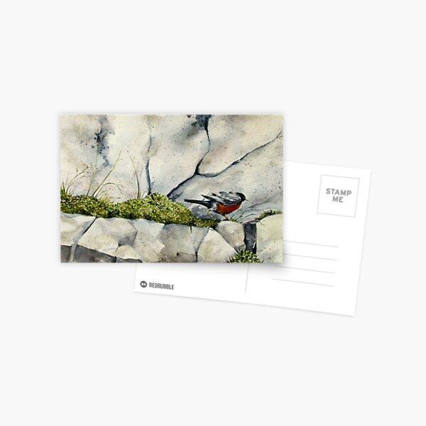 Racing Robin Postcard