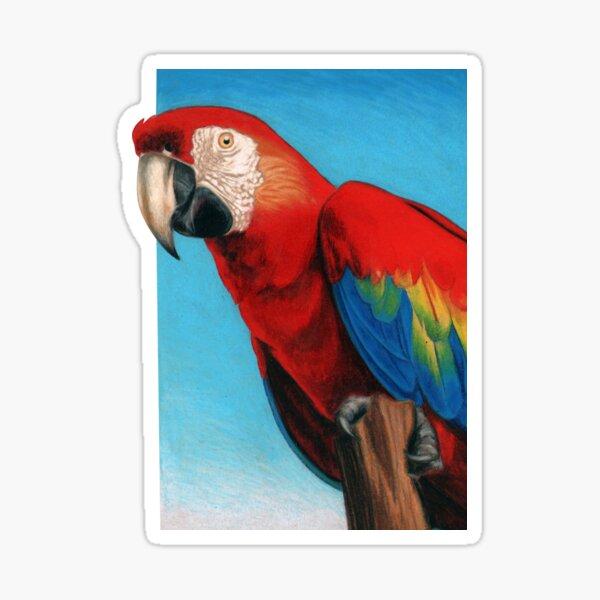 Scarlet Macaw art by Artist Sherrie Spencer Sticker
