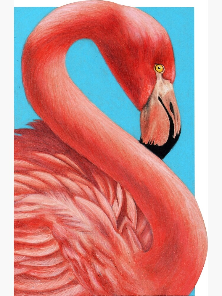 Flamingo art by Wildlife Artist Sherrie Spencer by serrynawolfe